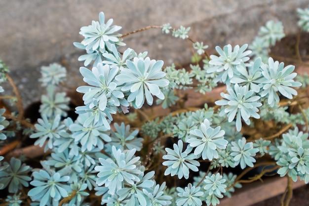 Piante verdi o succulente in vaso di argilla marrone