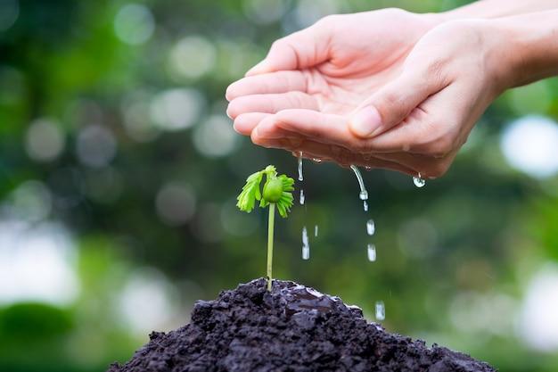 Pianti la crescita con la mano che innaffia su suolo e luce solare e fondo verde del bokeh