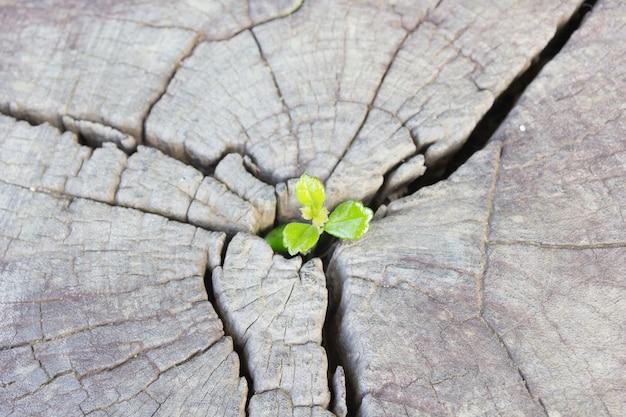 Piantina che cresce nel tronco centrale come un concetto di nuova vita