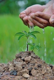Piantina delle piante mani che nutrono e innaffiano le giovani piante del bambino che crescono nella germinazione