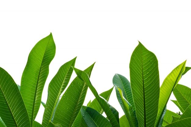 Piantina e pianta che crescono nel suolo isolato