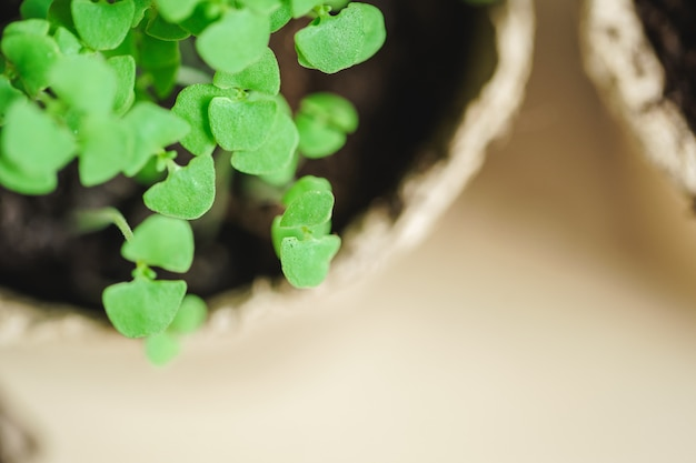 Piantina verde che cresce dal suolo