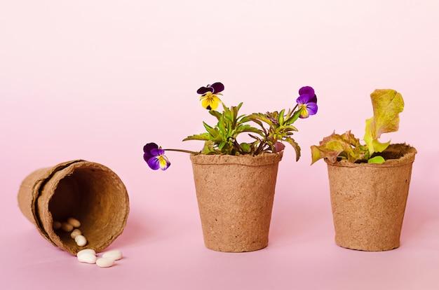 Piantine in crescita, fiori, semi, verdure, verdure in vasi di torba. giardinaggio primaverile, strumenti, attrezzature.