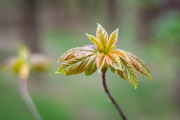 Piantine piantate vicino alla foresta con le giovani foglie in primavera.