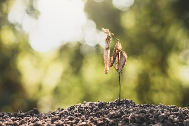 Piantine su suolo asciutto, concetto di riscaldamento globale.