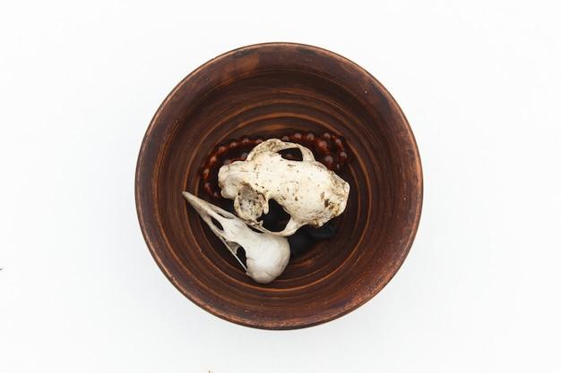 Piatto di argilla con teschi di gatto e uccello su bianco