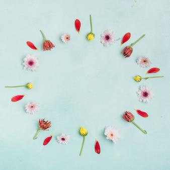 Piatto disteso di margherite e petali di primavera