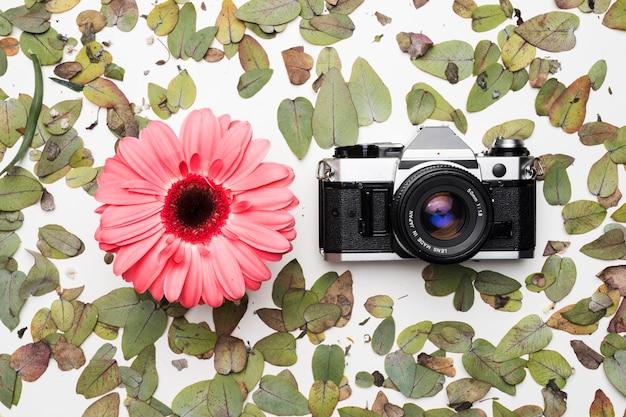 Piatto laico della fotocamera sulle foglie