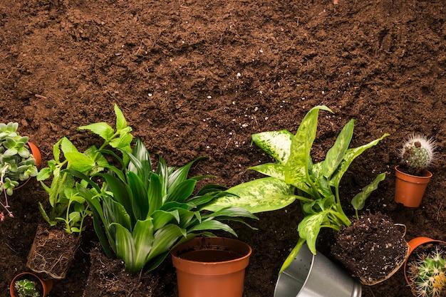 Piatto posare di piante e attrezzi da giardinaggio con copyspace