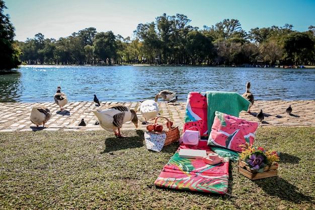 Pic-nic nel parco con oche selvatiche e lago