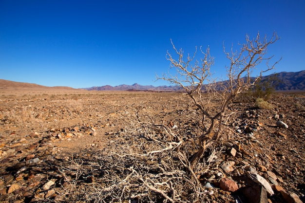 Picco della cavaturaccioli della california del parco nazionale di death valley