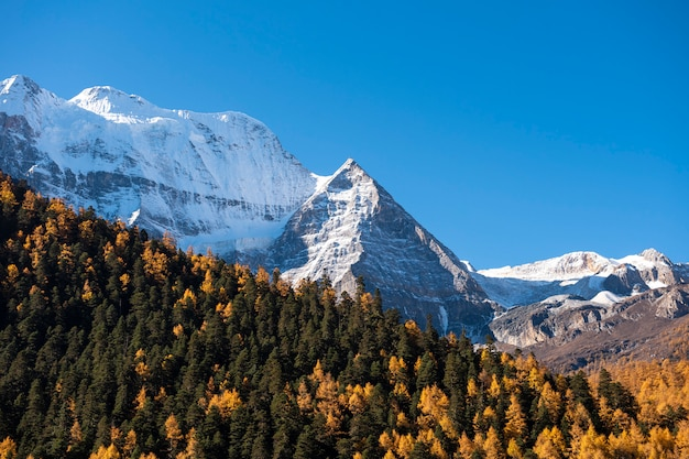 Picco della neve di bella vista con le foglie di autunno nella riserva naturale yading, sichuan, cina.