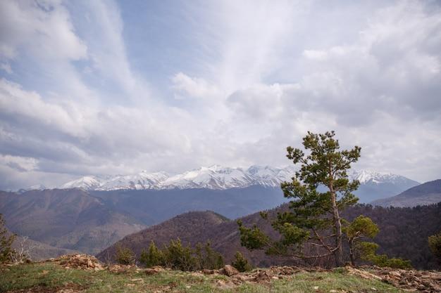 Picco di montagna delle nuvole della foresta