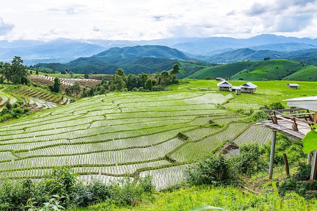 Piccola casa e terrazza del riso in un'illuminazione nuvolosa circondata da alberi e montagne.