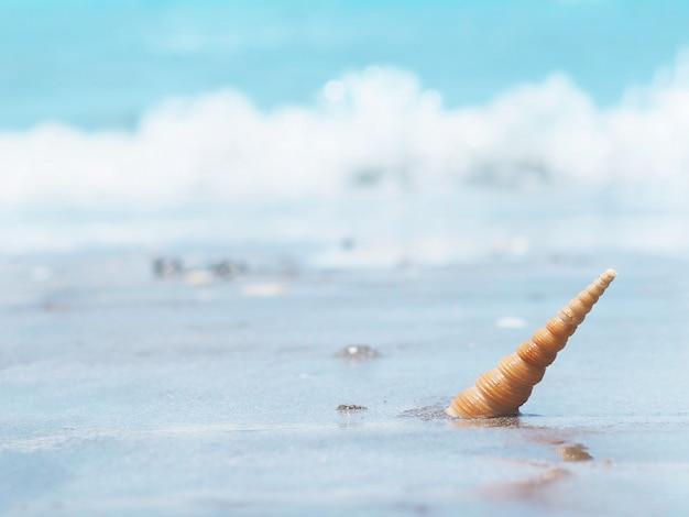 Piccola conchiglia arancia in riva al mare.