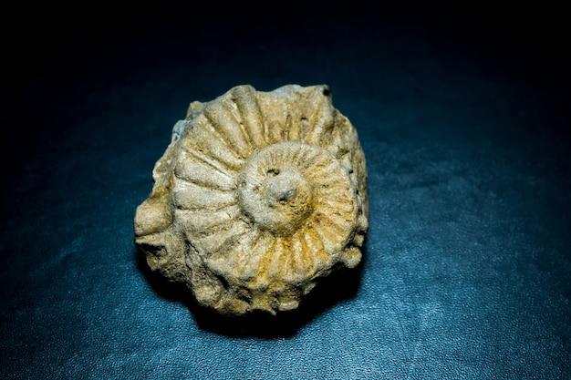 Piccola conchiglia fossilizzata