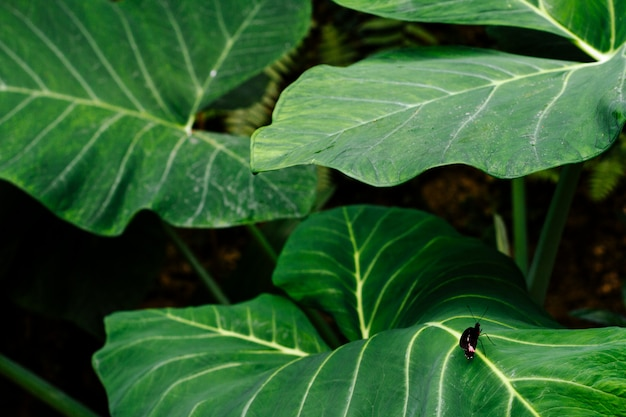 Piccola farfalla su grandi foglie