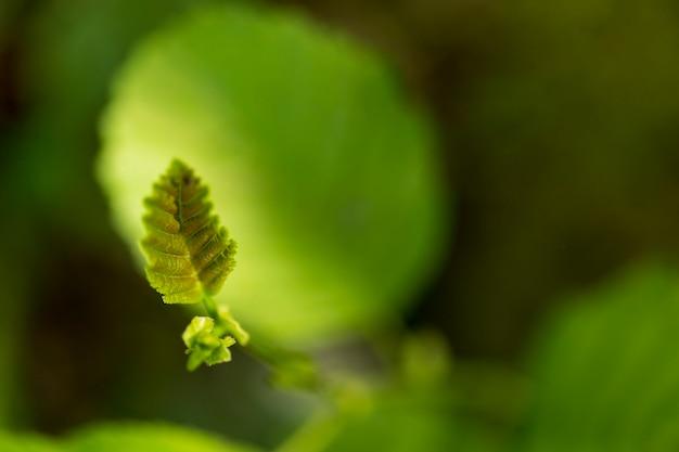 Piccola foglia carina con sfondo verde sfocato