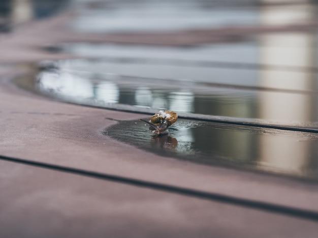 Piccola lumaca che striscia sul pavimento bagnato.