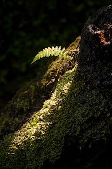 Piccola macchia di luce nella foresta