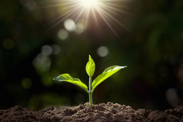 Piccola pianta che cresce in giardino con la luce solare