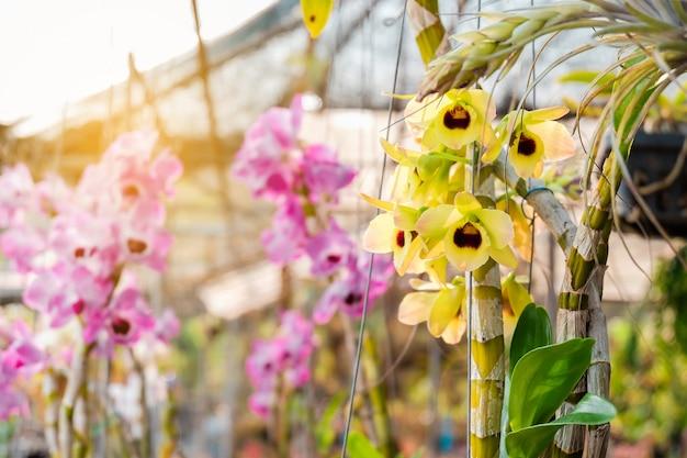 Piccola pianta di fiori su terra, mini concetto del giardino.