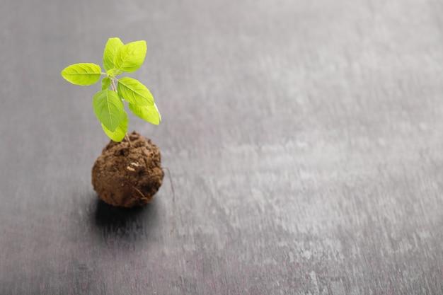 Piccola pianta su blac