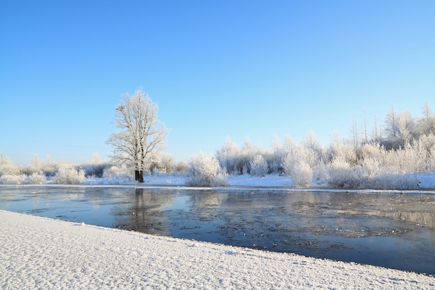 Piccola quercia sul fiume costa