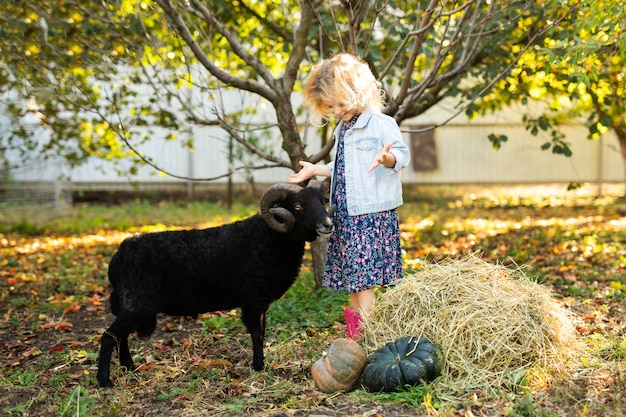 Piccola ragazza bionda riccia che alimenta le pecore domestiche nere. concetto di vita del contadino