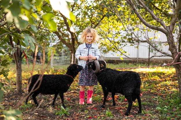 Piccola ragazza bionda riccia in rivestimento del denim e stivali rosa che alimentano due pecore domestiche nere nel giardino del paese. concetto di vita del contadino