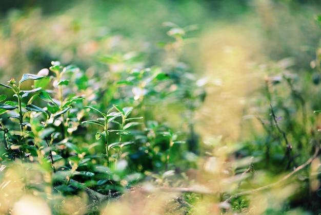 Piccola struttura delle foglie verdi in foresta. natura selvaggia. concetto di estate