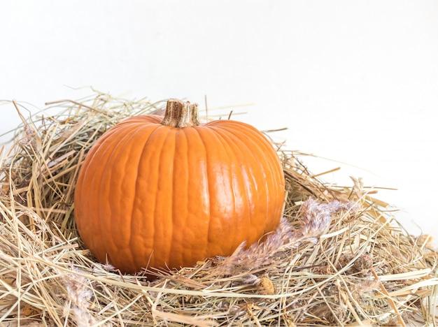 Piccola zucca arancio in erba asciutta isolata su bianco
