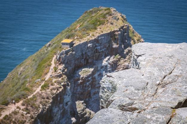 Piccole lucertole di agama sull'orlo della roccia a cape point, sudafrica
