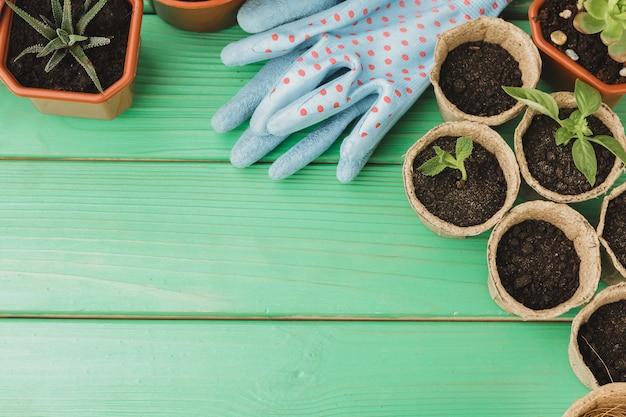Piccole piante succulente sono pronte per il trapianto da vicino su legno