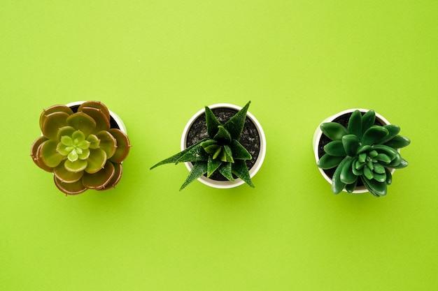Piccole piante succulente su una composizione verde e minimale semplice