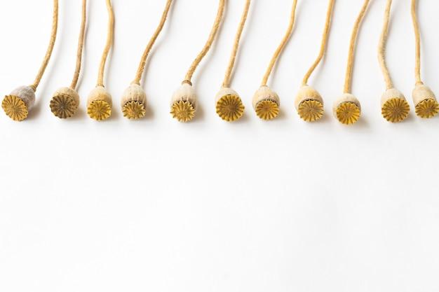 Piccole teste di papavero su un lungo stelo su uno sfondo bianco