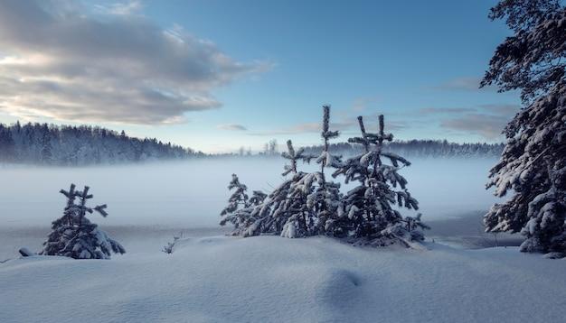 Piccoli alberi in inverno contro un lago nebbioso