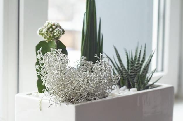 Piccoli cactus multicolori e piante grasse in una grande pentola bianca sul davanzale della finestra, soft focus, posto per il testo.