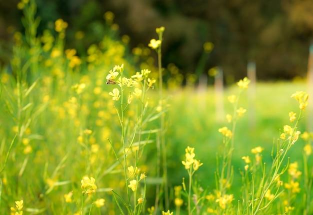 Piccoli fiori gialli di fioritura nell'estate naturale del giardino