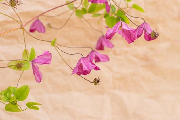 Piccoli fiori viola su carta