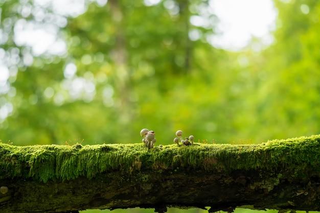 Piccoli funghi non commestibili nella foresta