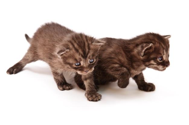 Piccoli gattini allegri divertenti isolati