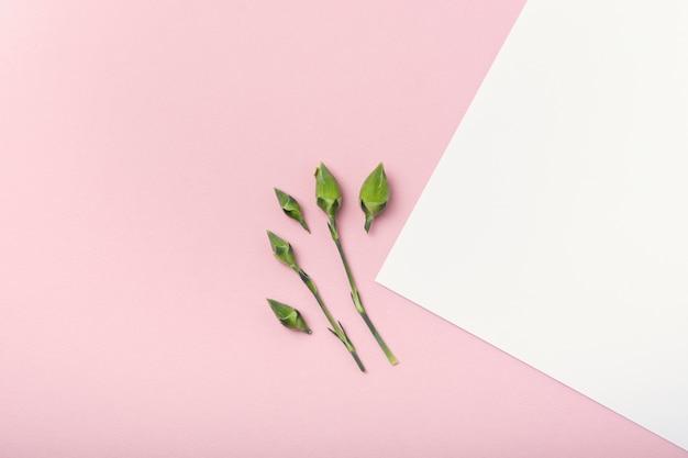 Piccoli germogli di fiore di vista superiore sul fondo bianco e rosa dello spazio della copia