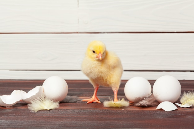 Piccoli pulcini gialli e gusci d'uovo