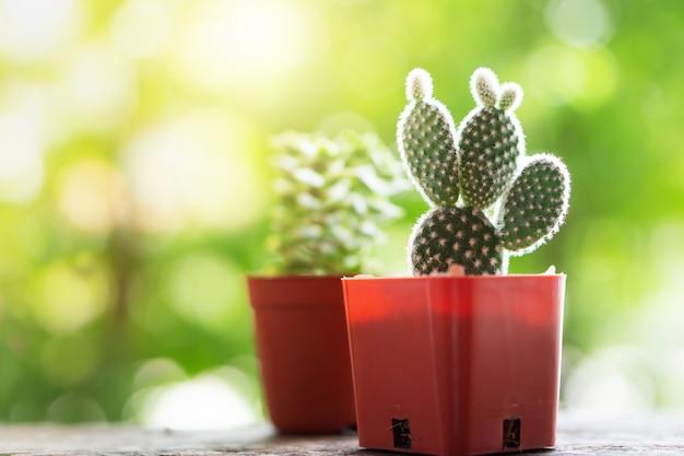 Piccoli vasi di piante di cactus verde in giardino