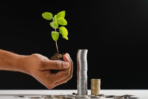 Piccolo albero e pila di monete indiane