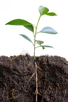 Piccolo albero nel terreno.