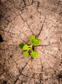 Piccolo albero sul ceppo