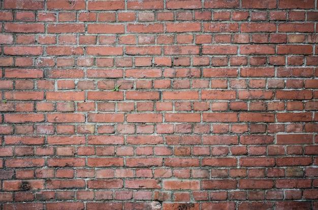 Piccolo albero verde sul vecchio fondo di struttura del muro di mattoni di rosso di lerciume