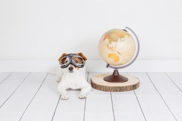 Piccolo bello cane sveglio che si siede sul pavimento, parete bianca con il globo del mondo inoltre. indossa occhiali da aviatore. concetto di viaggio ed educazione. stile di vita